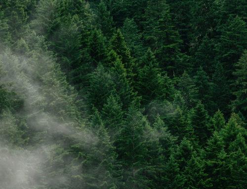 Sistemas de Certificação Florestal FSC e PEFC
